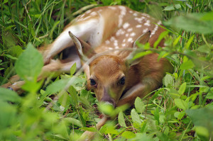 """Fawn over a Geocache"" Check out A Goddess Journey in the news AGAIN!!!"